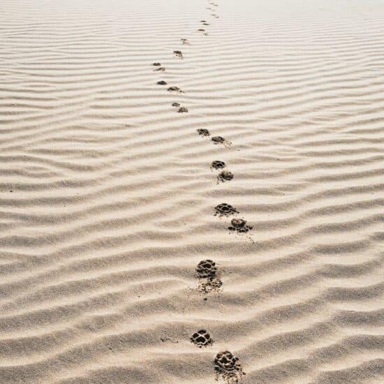 Tierspuren im Sand